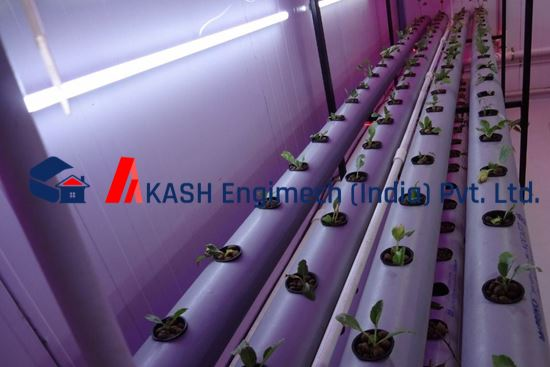 Picture of Hydroponics